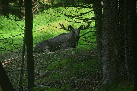 Spiegelau, Deutschland: Wildtiergehege