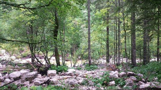 Hike&Bike Slovenia-Day Tours: Foresta