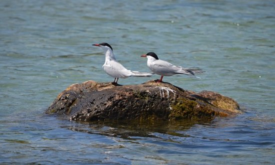 Wiarton, Canadá: Many birds pass through The Fishing Islands