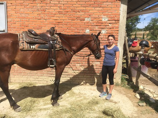 Horses and Vineyards : photo1.jpg