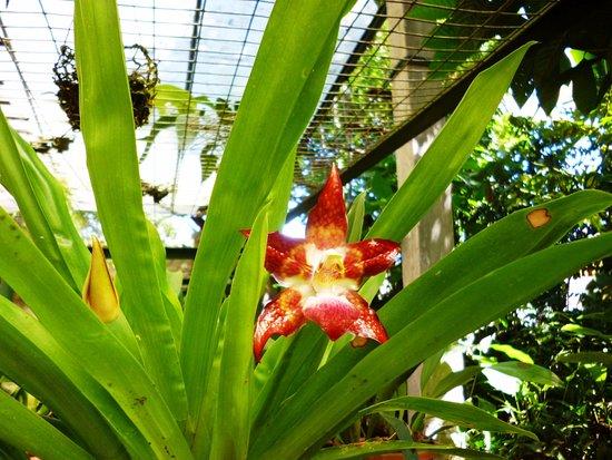 Cabanas Armonia y Jardin de Orquideas: Orquideario