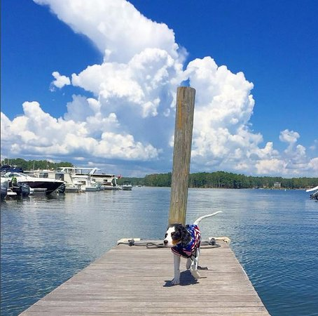 Irmo, Karolina Południowa: The pup walking the dock after his first time riding on the paddleboard.