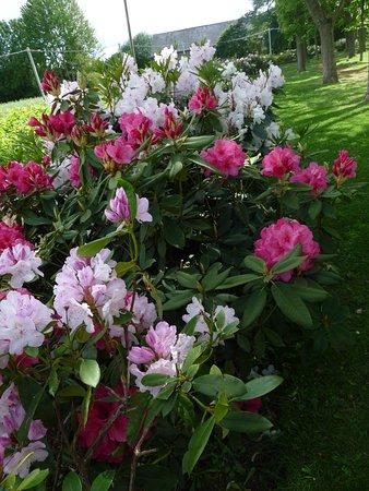 Allee De Rhododendrons Picture Of Centre D Art Contemporain Matmut Saint Pierre De Varengeville Tripadvisor
