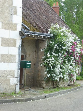 Chedigny, France : ensemble rosiers vue rue
