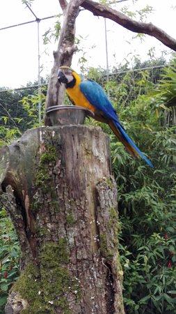 Jurques, Frankrike: la volière, des oiseaux splendides et à portée de main