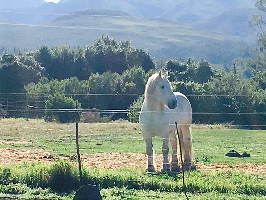 Outeniqua Moon Percheron Stud and Guest Farm: Some pics taken on my beautiful long weekend at Outeniqua Moon...Mouth-watering cuisine, breath