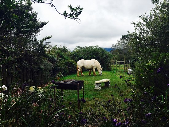 Outeniqua Moon Percheron Stud and Guest Farm: Loved my time at Outeniqua Moon...some more pics.