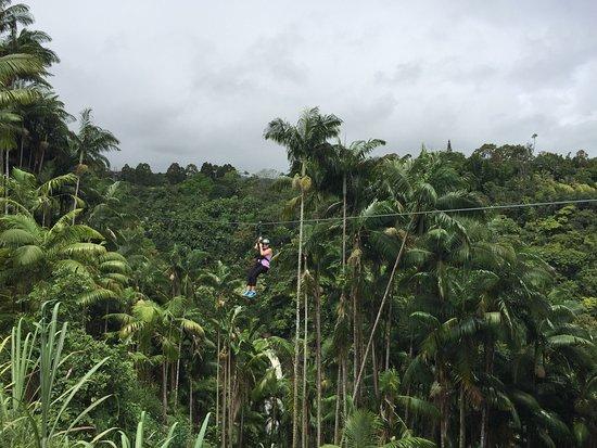 Honomu, Гавайи: photo0.jpg