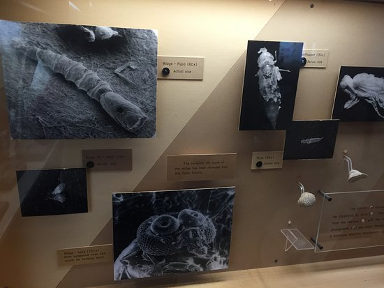 San Bernardino County Museum: 3D fossil insects. They once ran classes to find them by soaking rocks in acid!