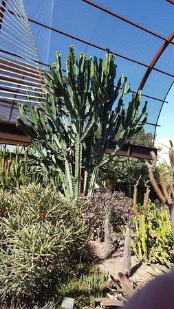Desert Botanical Garden: Visit To The Botanical Gardens In October