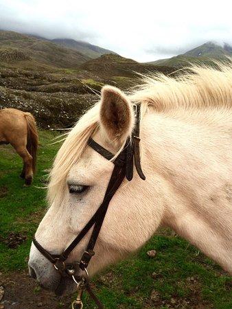 Mosfellsbaer, أيسلندا: photo1.jpg