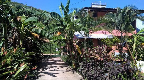 Roatan Backpackers' Hostel: The lush space surrounding the front building with private lofts
