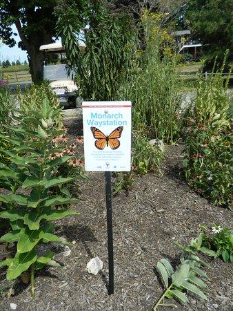 South Bass Island Lighthouse: Butterfly garden on premises