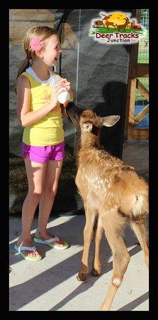 Cedar Springs, MI: Bottle feeding babies