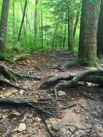 Forksville, Pensilvania: World's End State Park is beautiful