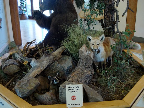 Lookout Mountain Nature Center: Exhibit inside- there are childrens activities also.