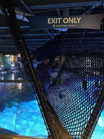 Walking On Shark Bridge Picture Of Newport Aquarium