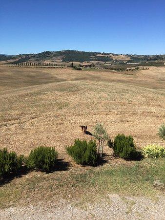 Agriturismo Il Rigo: photo3.jpg