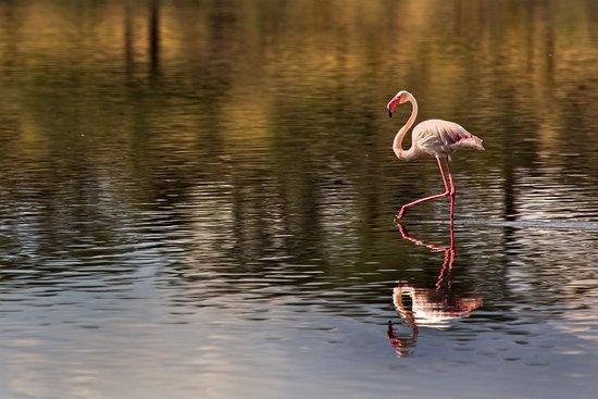 Ndutu Safari Lodge: Flamingo at lake Ndutu