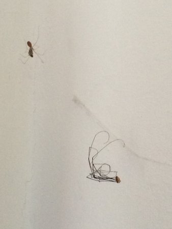 Petham, UK: Spiders and dried insects on wall