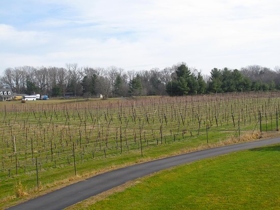 Amissville, VA: Vineyard View