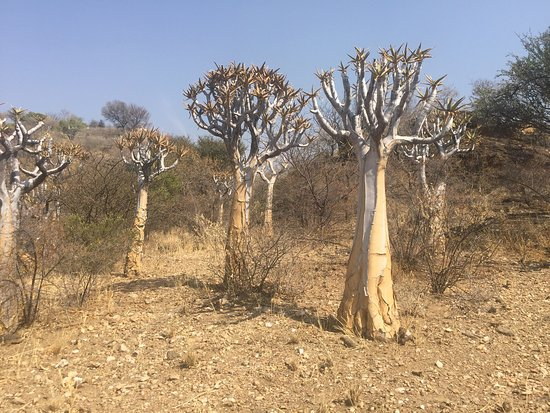 National Botanic Garden Of Namibia Windhoek Top Tips Before You Go With Photos Updated 2017