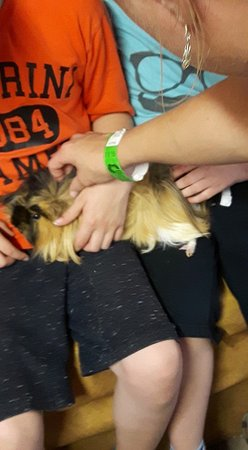 Kinvara, Irland: Petting the animals