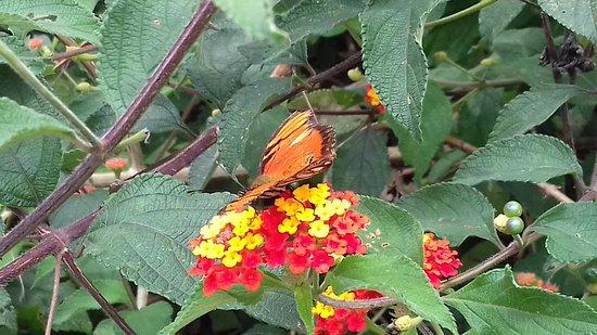 Grecia, Costa Rica: Mariposa monarca