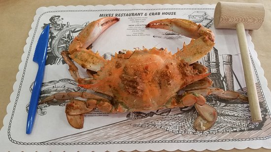 Pasadena, MD: Blue crab and the tools to eat it