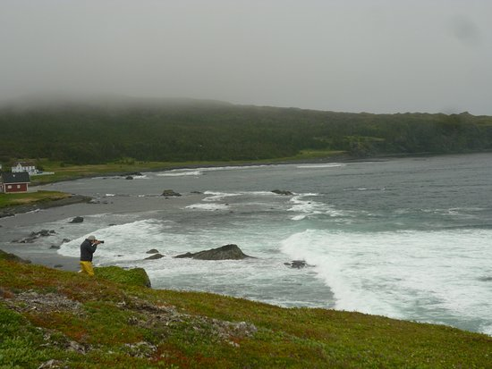 Newfoundland, Canadá: Nearby Ship Cove--whales and icebergs!
