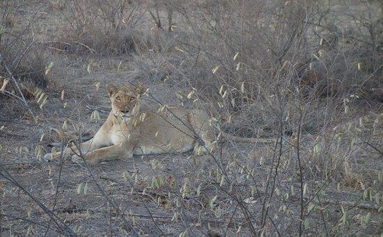 Zdjęcie Timbavati Private Nature Reserve