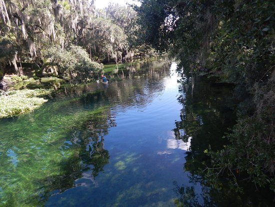Orange City, FL: The water changes from dark to clear near the spring. Look how beautiful it is near the spring.