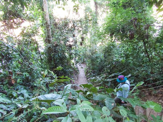 Refugio Amazonas: The steep path heading to the stairs to reach the boat