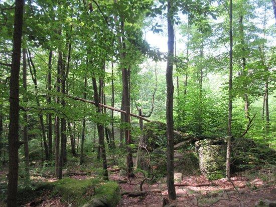 Warren, PA: Beautiful forest