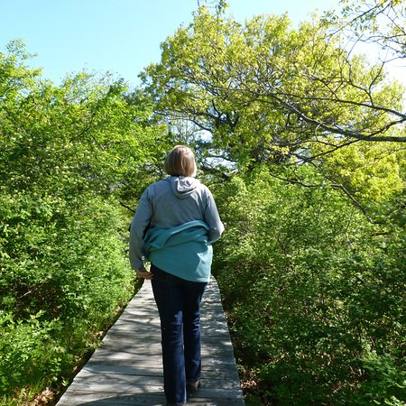 Newbury Beach: One of the trails on Plum Island