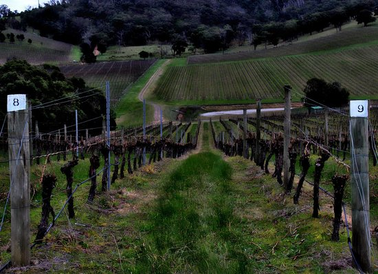 Dixons Creek, Australien: Vineyards