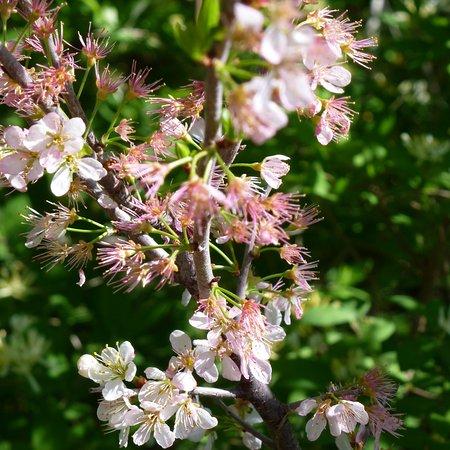 Parker River National Wildlife Refuge: Flowering shrubs in the Wildlife Refuge