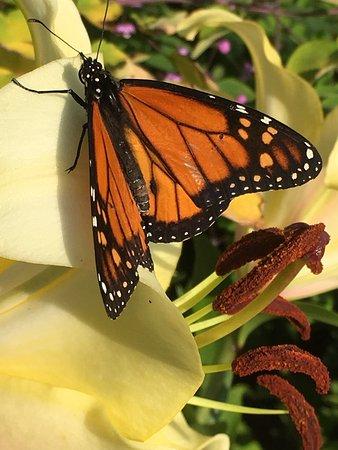 Thuya Gardens: photo8.jpg