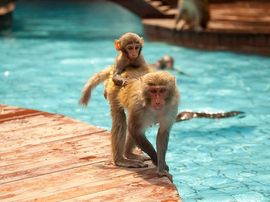 Санья, Китай: 猴岛