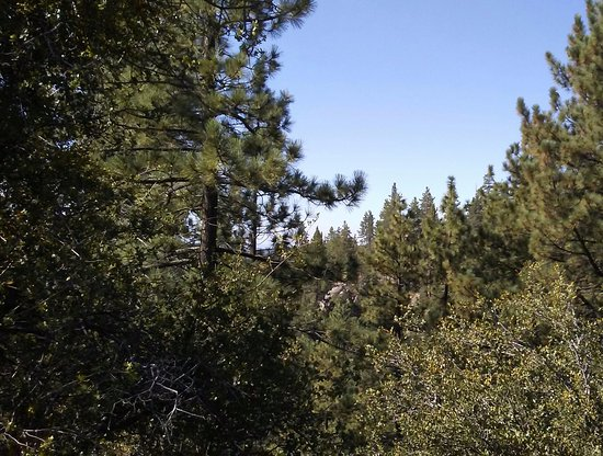 Idyllwild, แคลิฟอร์เนีย: View from the balcony