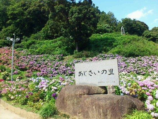 Katahara Tourist Association: あじさいの里