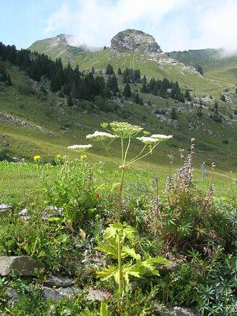 Portes du Soleil, فرنسا: Fleurs Portes Du Soleil