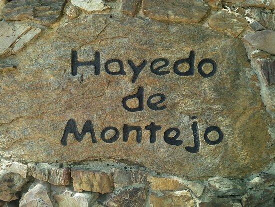 """Montejo de la Sierra, İspanya: El centro es paso obligado para visitar el """"Hayedo de Montejo"""" unos Km más adelante"""