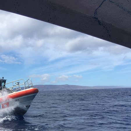 Maui Dive Shop: Oh look the Coast Guard, this escalated quickly.