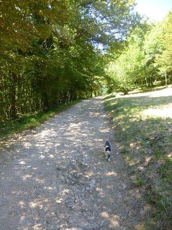 Amberieu-en-Bugey, ฝรั่งเศส: Le chemin accédant au château