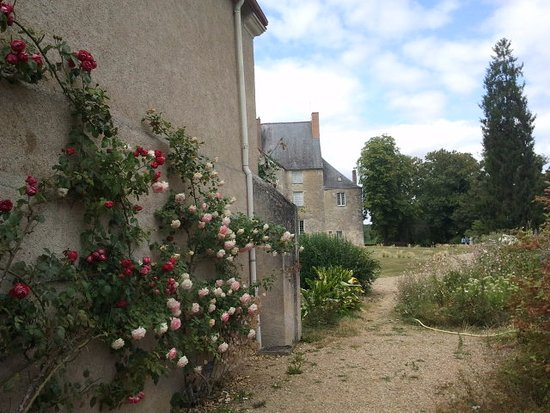 Sache, Frankrig: roseraie du jardin