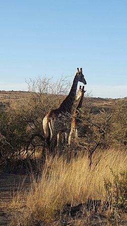 Ladysmith, Sudafrica: Elephant Rock Private Safari Lodge
