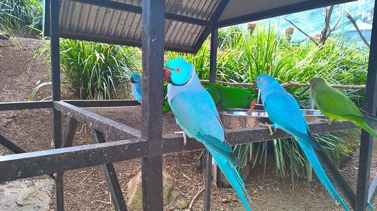 Maleny, Australia: Aviary tour