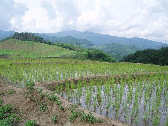 Bamboo Nest de Chiang Rai: rice