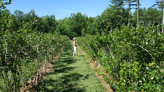 Moultonborough, NH: Row after row of yummy fruit